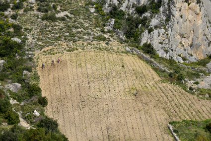 Cultivating steep hill vineyards of plavac mali_- Hvar island south shore