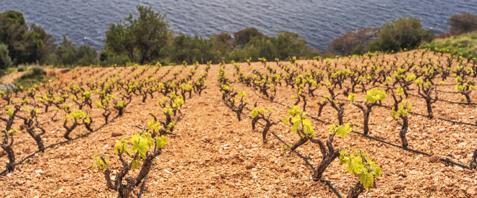 Hvar Full Day Wine Tour
