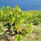 Hvar Wine Tour - Hvar Full Day Wine Tour